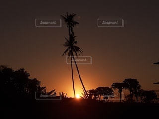 椰子に沈むサンセットの写真・画像素材[2360295]