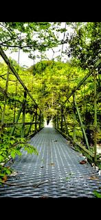 水域に架かる橋の写真・画像素材[2360668]