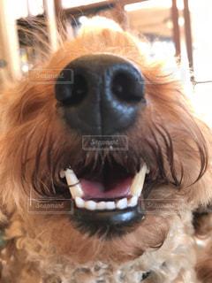 犬のクローズアップの写真・画像素材[3164854]