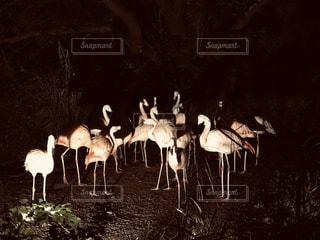夜の動物園の写真・画像素材[2427549]