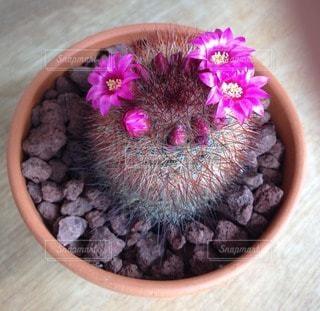 花の写真・画像素材[108788]