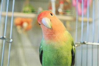 動物の写真・画像素材[2401951]