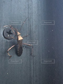 昆虫の写真・画像素材[113724]