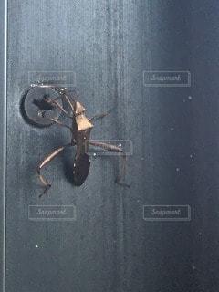 虫の写真・画像素材[113725]