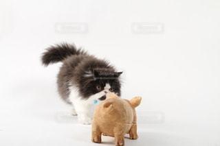 見つめ合う猫の写真・画像素材[2365438]