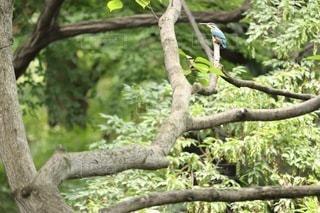 木で休む鳥の写真・画像素材[2396552]