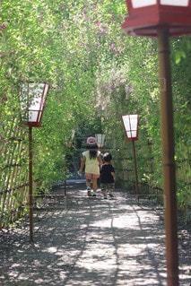 萩のトンネルを歩く兄弟の写真・画像素材[2485187]