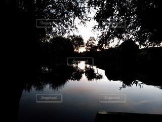 水域の隣の木の写真・画像素材[2366809]