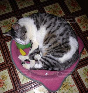 爪とぎの上で眠る猫の写真・画像素材[2367342]