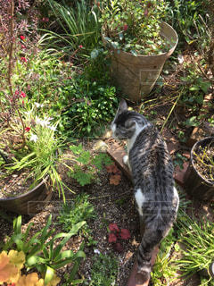 庭の猫の写真・画像素材[2367345]