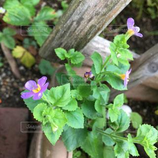 花のクローズアップの写真・画像素材[2367420]