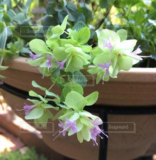 紫の花のクローズアップの写真・画像素材[2372830]