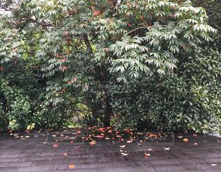 屋根の上の紅葉した落ち葉の写真・画像素材[2420707]