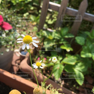 花のクローズアップの写真・画像素材[2433997]