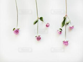 ピンクの花で満たされた白い花瓶の写真・画像素材[2710466]