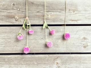 木製のデッキの上に並んでいるピンクの花のグループの写真・画像素材[2722420]