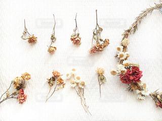 花をクローズアップするの写真・画像素材[2812007]