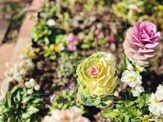 花をクローズアップするの写真・画像素材[2841630]