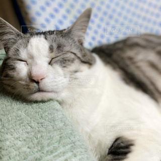 ベッドに横たわる猫の写真・画像素材[3115366]