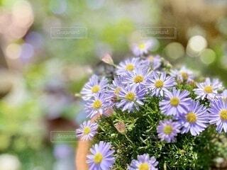 花のクローズアップの写真・画像素材[4129587]