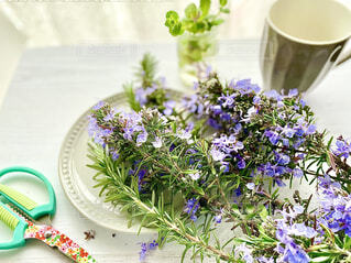 ローズマリーの花の写真・画像素材[4403225]