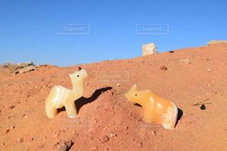 砂漠とラクダとサイの写真・画像素材[2371304]