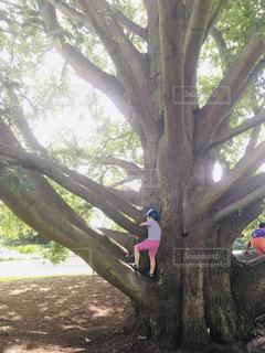 木の隣に立っている人の写真・画像素材[2382020]