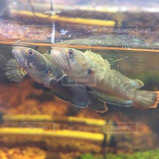 水の下を泳ぐ魚の写真・画像素材[2371948]