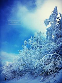 雪と木々の写真・画像素材[2374531]