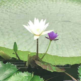 花のクローズアップの写真・画像素材[2391849]