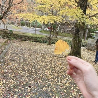 落ち葉を持つ手の写真・画像素材[2687024]