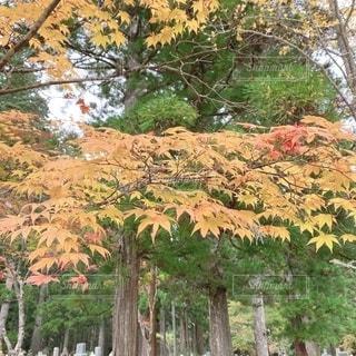 木の隣にあるヤシの木の群れの写真・画像素材[2707123]