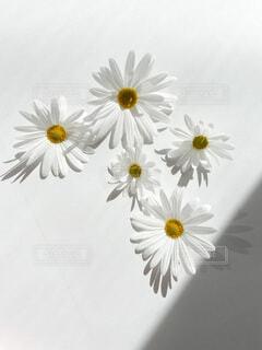 花のクローズアップの写真・画像素材[4175241]