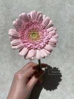 ピンクの傘を持つ手の写真・画像素材[4326706]