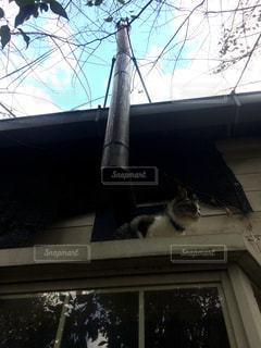 窓の上に座ってる猫の写真・画像素材[2374849]