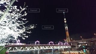 夜の桜と東京スカイツリーの写真・画像素材[2369973]