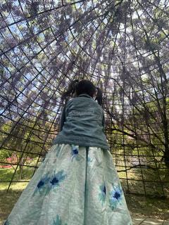 木の隣に立っている青いドレスを着た人の写真・画像素材[4398793]