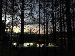 夕暮れ時の森の写真・画像素材[2372079]