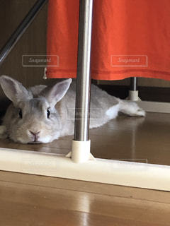 液状化したウサギの写真・画像素材[2372387]
