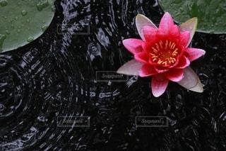 雨の日にこそ、美しくの写真・画像素材[2441385]
