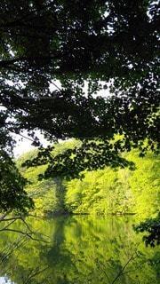 自然の写真・画像素材[128232]