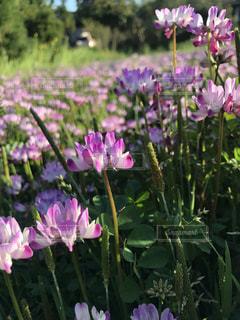 花のクローズアップの写真・画像素材[2374878]
