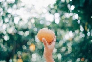 果物狩りの写真・画像素材[2786360]