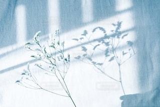 かすみ草の写真・画像素材[2786361]
