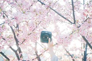 春の写真・画像素材[2896868]