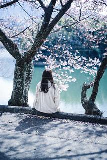 桜を見上げるの写真・画像素材[2896871]