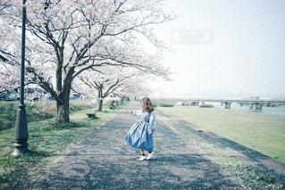 桜のように舞うの写真・画像素材[2901927]
