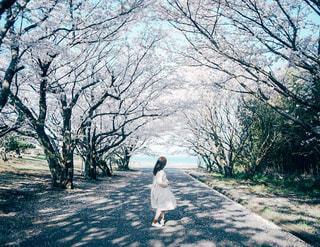 海の見える桜並木の写真・画像素材[2901928]