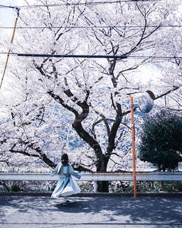 春のダンスの写真・画像素材[3125868]