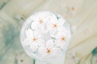 春の写真・画像素材[3125879]